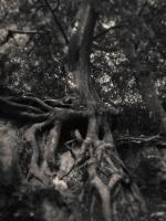 Sissinghurst_19