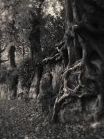 Sissinghurst_21