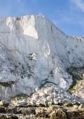 Beachy-Head-cliff.jpg