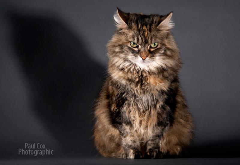 Shadow_Cat