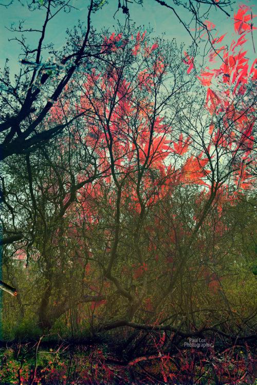 autumn-blend
