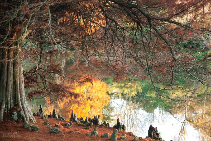 Autumn-reflections