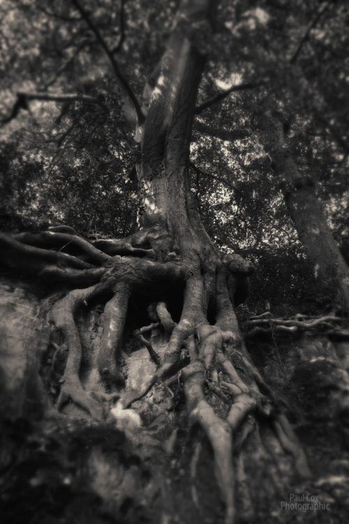 Witchy Trees