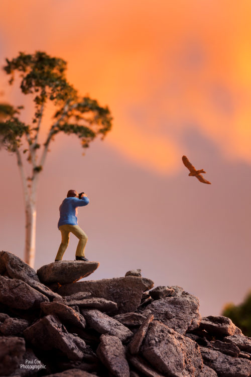 Diorama Bird Photographer
